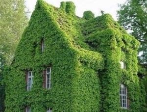 озеленение вертикальных поверхностей